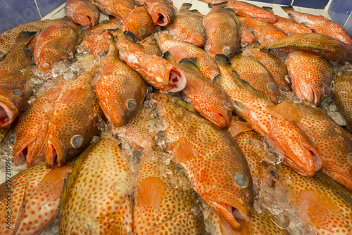 Bunch of Parrot Fish in a Market