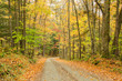 Forest Road and Autumn Colours