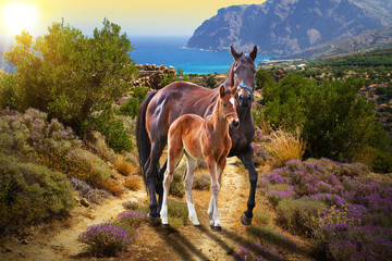 Horse with foal walking on the road at sunset