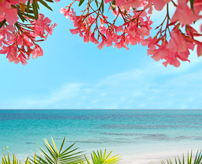 palm, flowers and sand