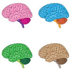 Human Brain Colors