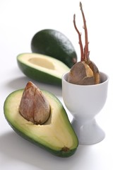 Young avocado - step by step - part 2