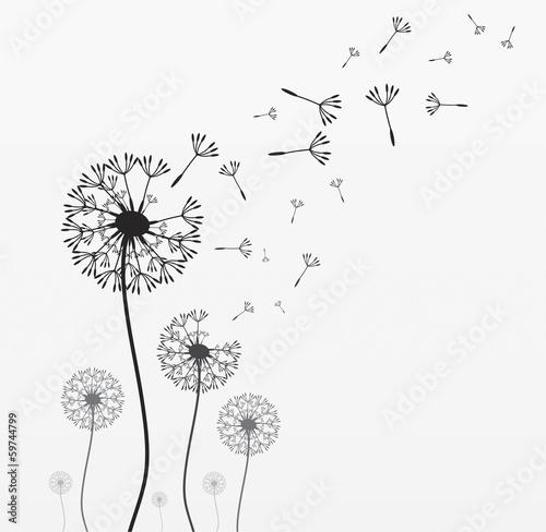 Fototapeta Seven vector dandelions