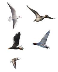 野鳥の飛翔