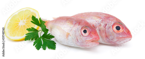 Fresh pagrus with slice of lemon and parsley isolated