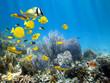Leinwanddruck Bild - Underwater coral reef with school of fish