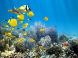 Underwater coral reef with school of fish - Fine Art prints