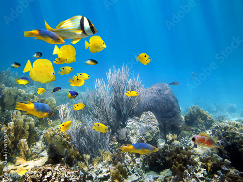 Poster Koraalriffen Underwater coral reef with school of fish