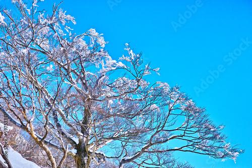 塔の岳の樹氷