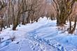 冬山の登山道