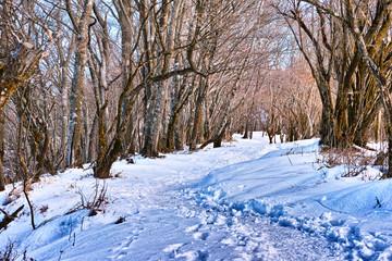 雪山の登山道