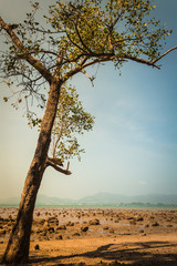 a tree on the beach when low tide under sunlight