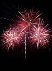 Colorful red fireworks i