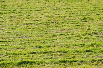open field of winter pastures