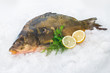 Common carp fish on ice