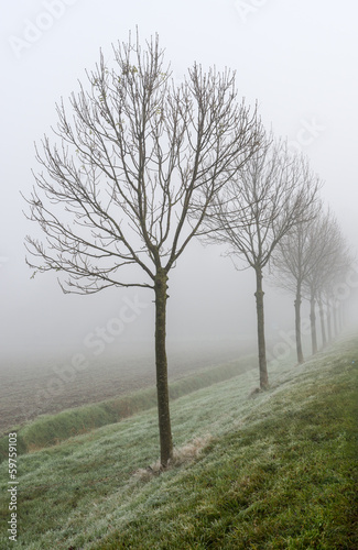 Endless row of trees in the mist
