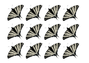 swallowtail butterflies pattern