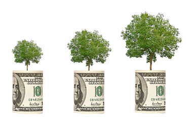 trees growing from dollar bill