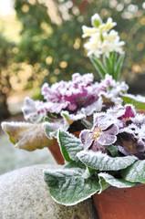 fleurs sous le givre