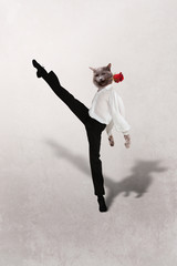 Cat dances  tango with a red  flower on  grey background
