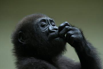 kleiner Affe kaut an den Fingern