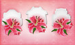 Beautiful gift cards with pink lily ,