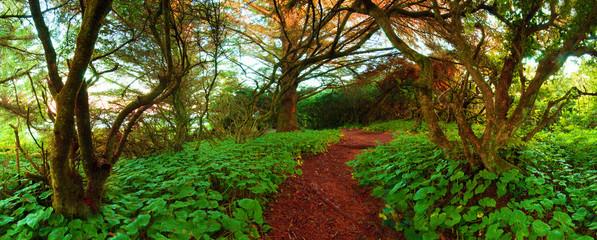 Adventure Path Through The Wilderness