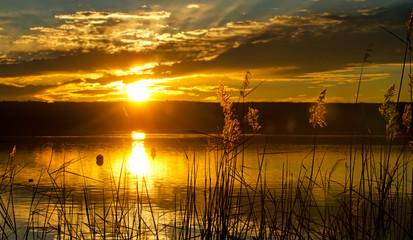 Schilf am See im Abendrot