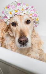 Bathroom to a dog