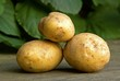Gathered new potatoes outdoors in summer.