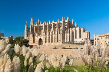 "Kathedrale ""La Seu"" in Palma de Mallorca - 7952"