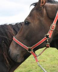 Horses together