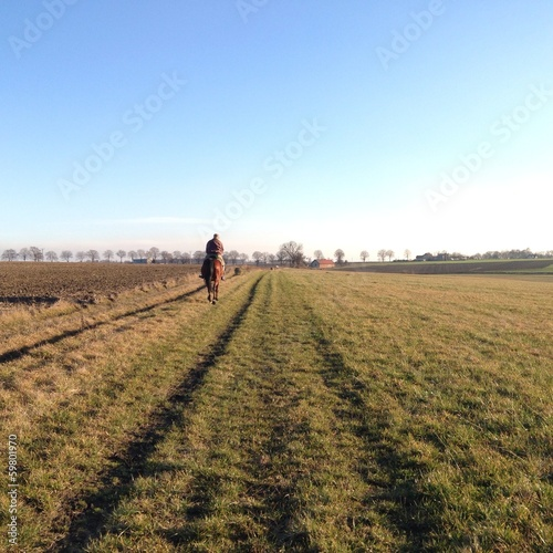 cavallo in campagna