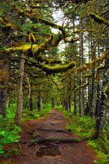 Alaskan rain forest