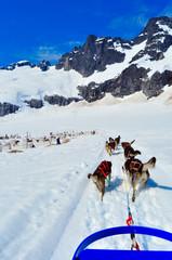 Husky dogs pulling sled, Mendenhall Glacier Juneau Alaska