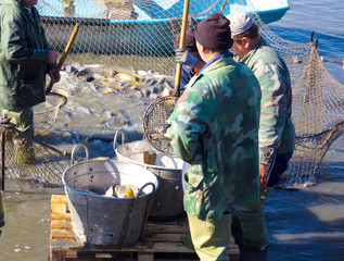 Workers in the fisheries