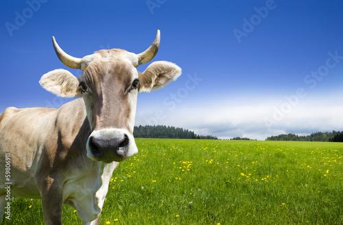 Fotobehang Koe Kuh auf der Alm