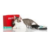 Erste Hilfe für die Katze - 59807518