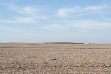 plowed field with a group of steppe birds