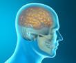 Cervello cranio testa anatomia ai raggi x