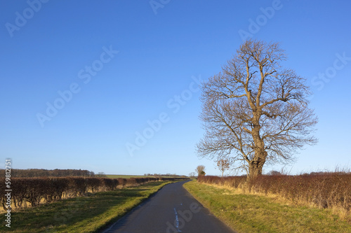 roadside ash tree