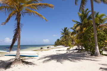 Idyllic beach with coconut trees at Mexico