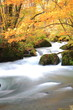 Autumn Colors of Oirase Stream, Aomori, Japan