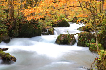 Autumn Colors of Oirase Stream, Aomori, Japan
