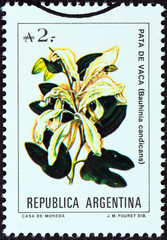 Brazilian orchid tree (Bauhinia candicans) (Argentina 1988)