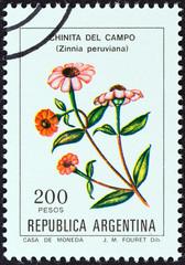 Peruvian Zinnia (Zinnia peruviana) (Argentina 1982)