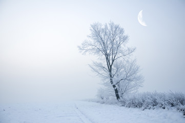 zima28