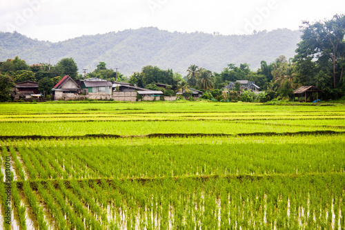 Paddy fields and a village in northern Thailand
