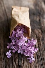 Comon lilac