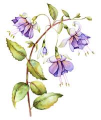 Watercolor with fuchsia